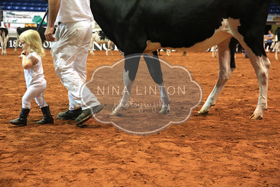 Old Home Week Holstein PeeWee Showmanship 2014