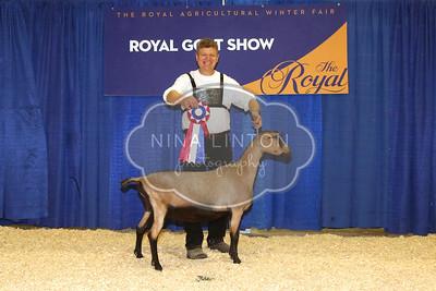 RAWF 2015 Dairy Goat Show Champions