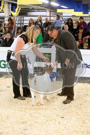 RAWF Boer Goat Show Candids 2014