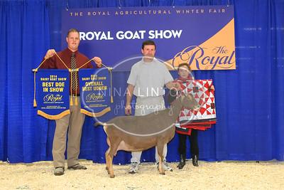 RAWF Dairy Goat Show Champions 2014