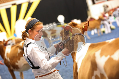 World Dairy Expo 2015 Guernsey Show