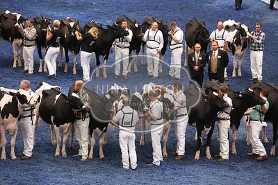 World Dairy Expo 2015 Holstein Show