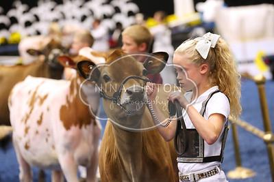 World Dairy Expo 2015 Showmanship