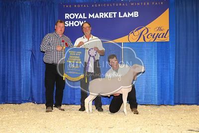 RAWF 2015 Market Lamb Show Champions